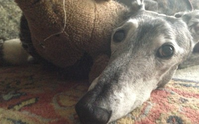 The 4 Steps To Processing Grief That I Learned From My Dog Hanna